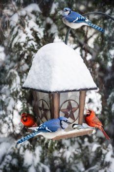 WINTER BIRD FEEDER IN GASTONIA NC