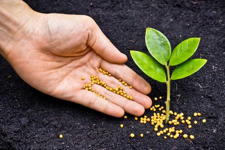 SLOW RELEASE PLANT FERTILIZATION GASTONIA NC