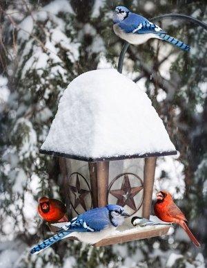 WINTER BIRD FEEDER GASTONIA NC